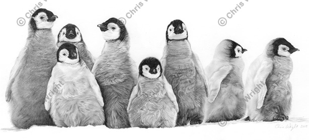 Penguin Family Drawing Penguin Draw The...500 x 714